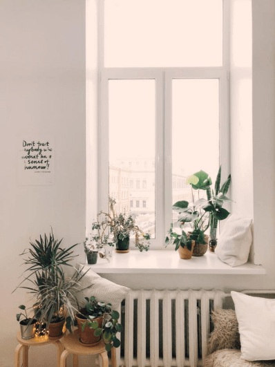 5 Tips To Care For Indoor Plants In An Apartment
